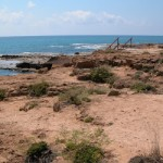Miercoles de fondos forestales: hoy Cabo Cervera