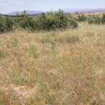 Creación de islotes forestales en tierras de cultivo