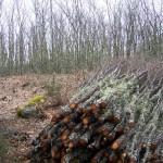 La Comunidad Valenciana pagará por retirar leñas