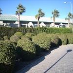 Topiaria en la Universidad