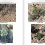 Inventario forestal en Agost