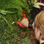 Nuevo curso de jardines verticales en Barcelona
