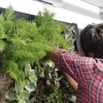 Nuevo curso de Jardines Verticales en Madrid