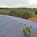 Nueva cubierta vegetal ultraligera