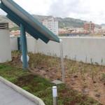 Primera cubierta vegetal de Villena
