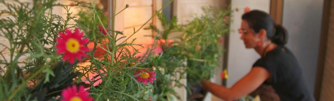 Alicante forestal proyectos de jardiner a paisajismo for Jardin vertical castellon