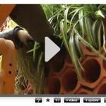 Vídeo del Jardinet del Pedró, en Barcelona