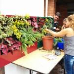 Curso de jardines verticales en Bogotá, un éxito
