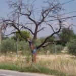 Árboles pintados en Muchamiel/Mutxamel