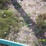 El azafrán serrano – «Crocus serotinus»