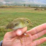 ¿Qué hacemos si encontramos un pájaro anillado?