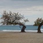 Taray en Playa Torres. Miércoles: Fondo forestal