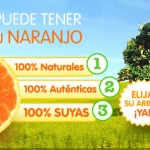 Alquilar un árbol, el futuro de la producción agrícola