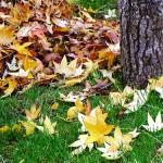 Hoy empieza el otoño