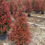 Árboles columnares aislados (I)