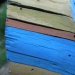 Un misterio menos: los árboles pintados