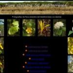 Un web de visita obligatoria (botánicamente hablando)