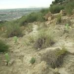10 consejos para reforestar el Puig Campana