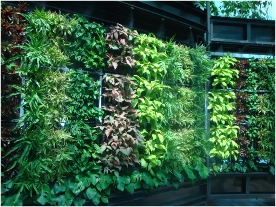 Un jard n vertical sencillo alicante forestal Jardines verticales baratos
