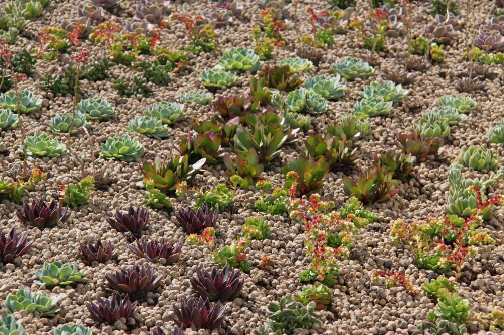Cubiertas vegetales en Valencia
