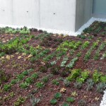 Cubiertas vegetales: 8 datos interesantes