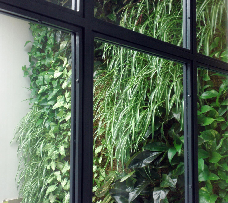 jardín vertical jardines verticales iluminación madrid baja demanda lumínica leaf.box pared vegetal ecosistema vertical