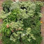 Jardines verticales de plantas comestibles