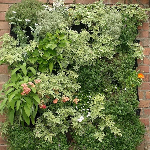 Jardines verticales de plantas comestibles alicante forestal for Plantas usadas para jardines verticales