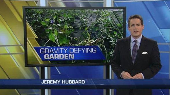 jardín vertical jardines verticales green wall vertical garden denver colorado
