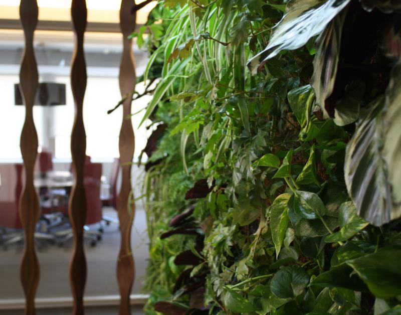 jardín vertical jardines verticales green wall ecosistema vertical vertical paisajismo Madrid interior
