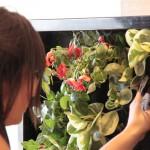 Curso de jardinería vertical en Madrid