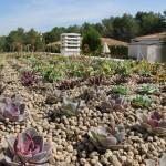 Beneficios de las cubiertas vegetales