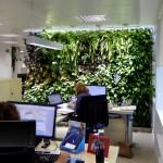 Los jardines verticales de Madrid cumplen 1 año