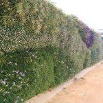 Jardín vertical en Cádiz – Parque Genovés