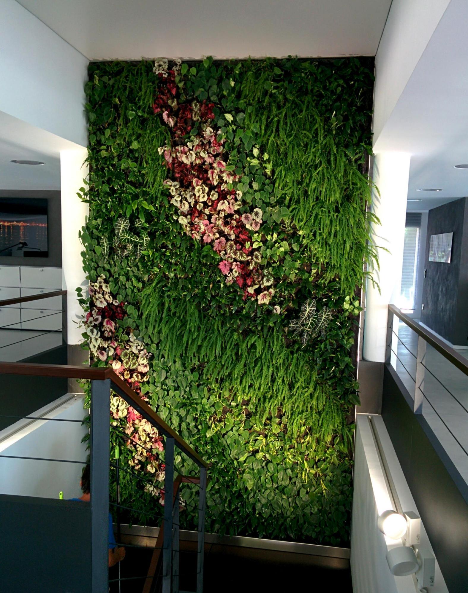 Jard n vertical en mallorca santa pon a alicante forestal for Plantas recomendadas para jardin vertical