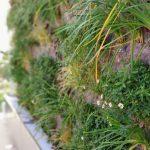 Jardín vertical en Mallorca – Calvià