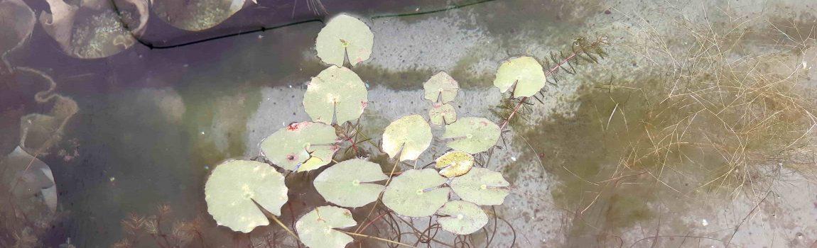 Nuevos tiempos para las piscinas naturales