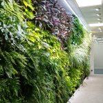 Tres nuevos jardines verticales en Ferring, Madrid
