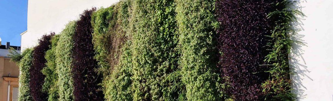 Tres jardines verticales en Gandía