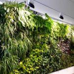 Aire acondicionado vegetal de la oficina