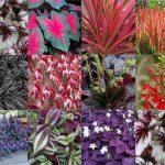 Especies de hoja roja para jardines verticales